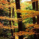 Orange Overlay by lallymac