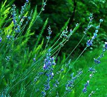 I think I am an Herb! by Kate Eller