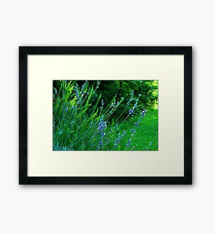 I think I am an Herb! Framed Print