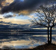 After The Storm by Carolyn  Fletcher