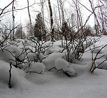 Winter moor by PierPhotography