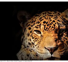 Jaguar Watching by Dennis Stewart