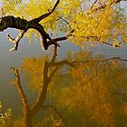 Autumn Reflections by lisapowell