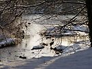 River Wharfe, Arthington by Graham Geldard