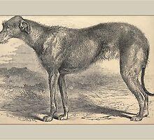 Deerhound General Greetings by Yesteryears