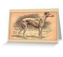 Greyhound Greetings Greeting Card