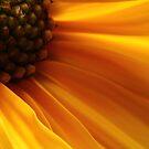 Fiore di autunno by jimmylu