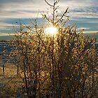 Alberta Sky, Winter - Alberta, Canada by Jessica Karran