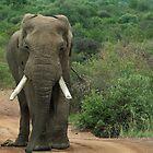 Pilanesberg Game reserve # by Mark Braham