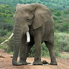 Pilanesberg Game reserve ### by Mark Braham