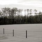 Winter Landscape B&W Alberta, Canada by Jessica Karran