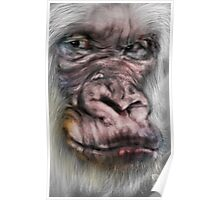 The Wise White Gorilla  Poster