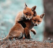 Fox Pups by Optimistic  Sammich