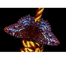 Butterfly by night Photographic Print