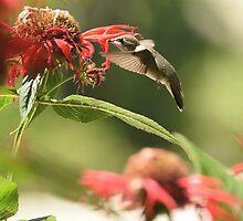 Nectar Seeker by DWMMPhotography