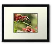 Nectar Seeker Framed Print