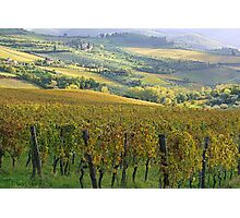 Fontodi's wineyards in Panzano - Toscana Photographic Print