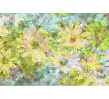 Watercolor Daisies Photographic Print