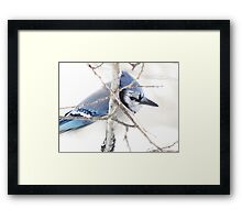Too Shy Framed Print
