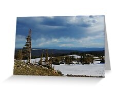 Wind bent trees, Wyoming Greeting Card
