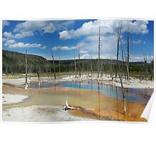 Dry trees in thermal waters, Yellowstone Poster