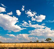 low horizon, field of wheat near Moree NSW, Australia by yellowfield