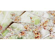 Watercolor Blossoms Photographic Print