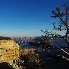 North Rim, Grand Canyon by Claudio Del Luongo