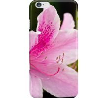 The Pink Azalea - iPhone / iPad Case iPhone Case/Skin