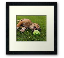 I'm having a ball.  Framed Print