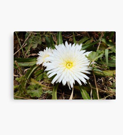pretty flower in a pretty place Canvas Print