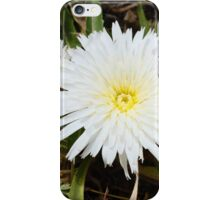 pretty flower in a pretty place iPhone Case/Skin