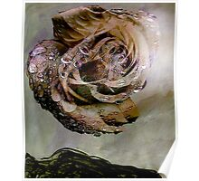 apparition.... eternal rose fantasy Poster