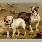 Vintage Bulldog Greeting Cards by Yesteryears