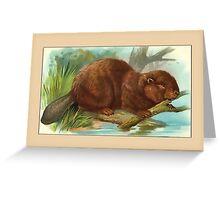Beaver General Greetings Greeting Card
