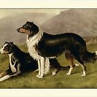 Vintage Collies Greeting Card by Yesteryears