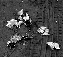 Autumn leafs on a Tire track by brijo