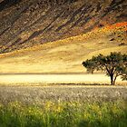 The Edge of the Desert by Jill Fisher