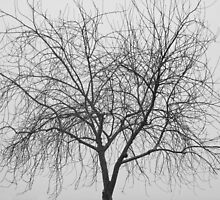 Tree Abstract Black and White by Bo Insogna