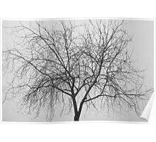 Tree Abstract Black and White Poster