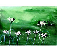 Flowers 3 Photographic Print