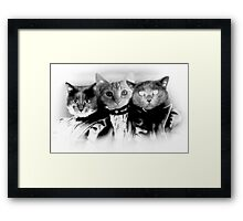 The Three Catfield Sisters Framed Print