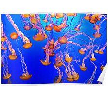 Jellyfish, Monterey Bay Aquarium Poster