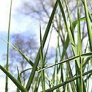 Meadow by MichaelK