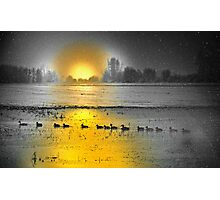 Follow The Duck Photographic Print