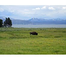 The Bison Wanderer Photographic Print