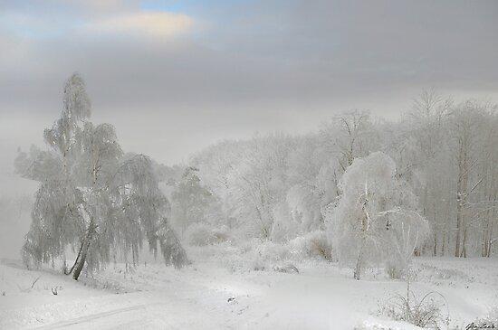 White Trees by Igor Zenin