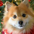 Maverick's Christmas by ©Dawne M. Dunton