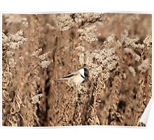 Fall Chickadee Poster