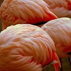 Swan Song.........? No, just Pink Flamingoes by ctheworld